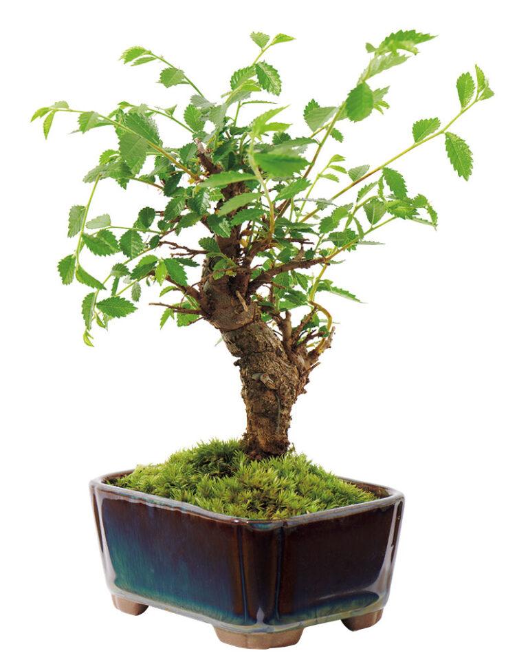 〈花政〉の山野草の植え込み鉢
