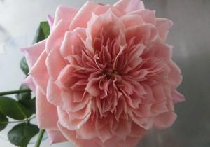 【Vol.16】花とゲランな日々