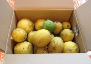 【Vol.27】話題の新調味料・塩レモン! つくってみました!